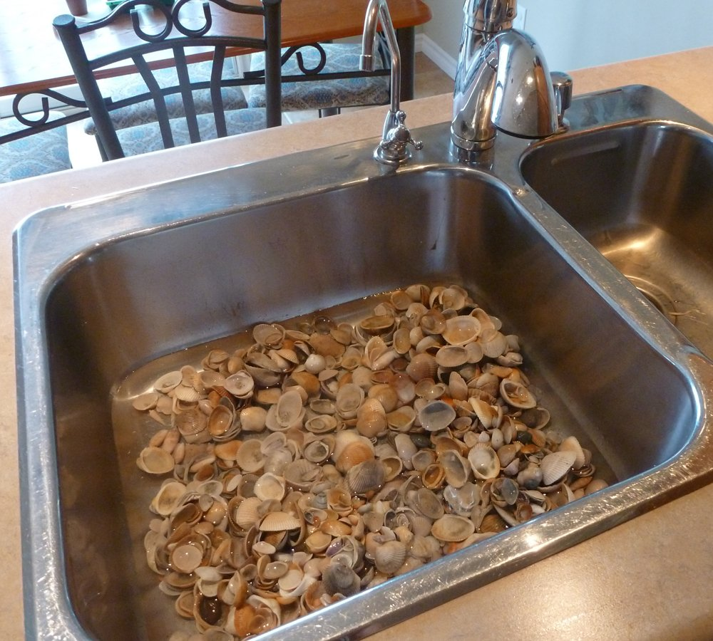 Giving my Seashells a Bath